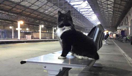 Bu kedinin yaptığı işi görünce şaşıracaksınız!