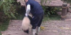 Pandanın oyun isteği sosyal medyayı salladı