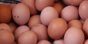 Yumurta kabuğunu fırına koyun sonra da…